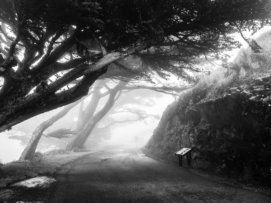 Fog Photograph - Stroll In The Fog by Valeria Donaldson