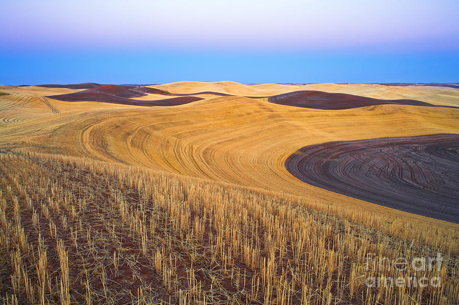 Landscape Photograph - Stubble by Don Hall