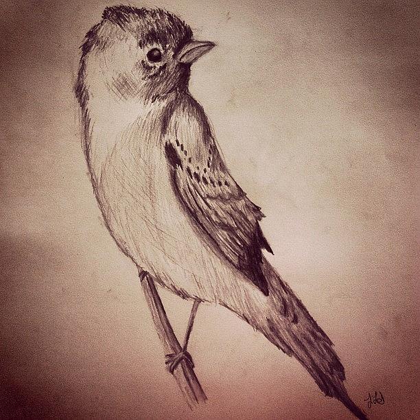 Bird Drawing - Study Of A Bird by Jessica Sanders
