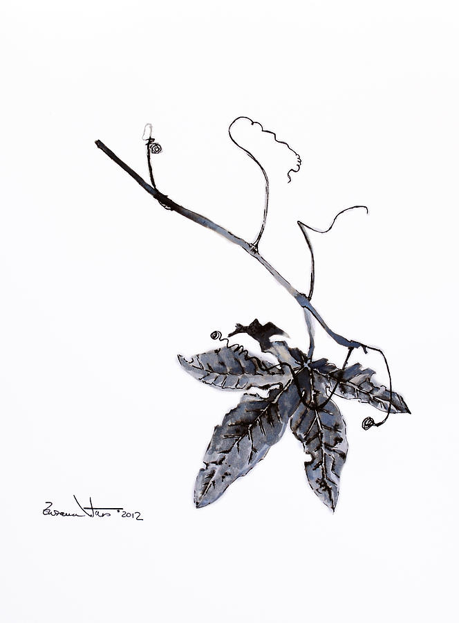 Leaf Drawing - Study Of Leaf In Ink by Zuzana Vass