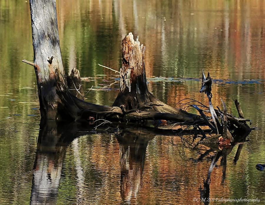 Stump Reflection Photograph
