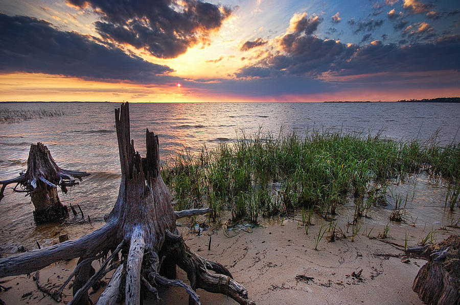Alabama Photograph - Stumps And Sunset On Oyster Bay by Michael Thomas