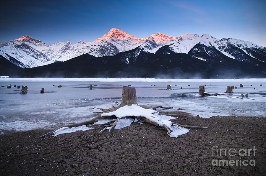 Ice Photograph - Stumps At Spray Lakes by Ginevre Smith