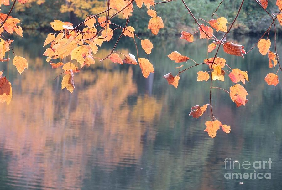 Reflections Photograph - Subtle Autumn Reflections by Anita Adams