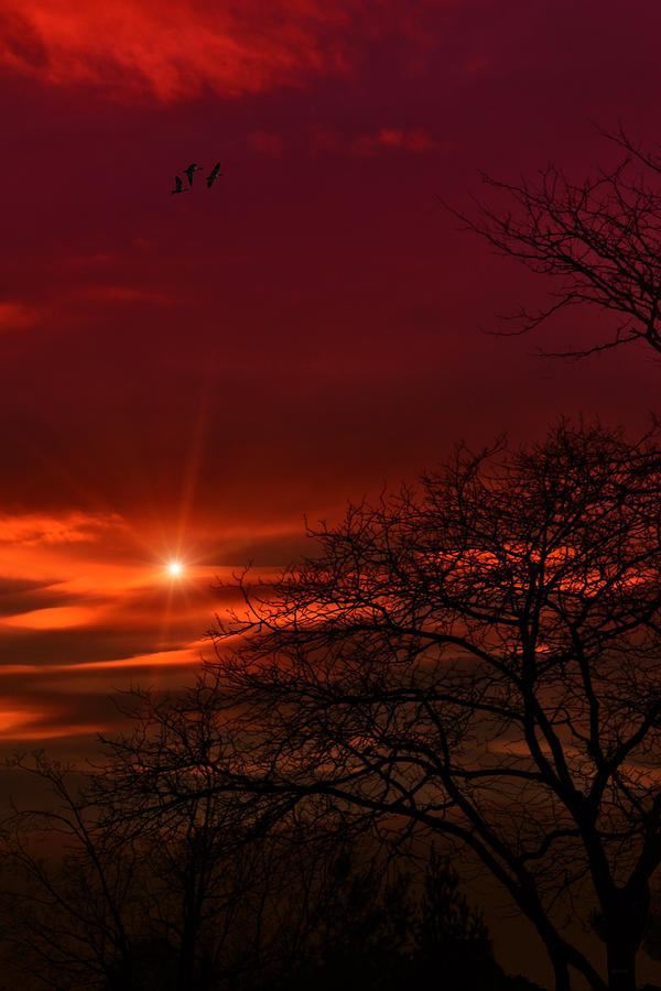 Sunset Photograph - Suburban Skies by Tom York Images
