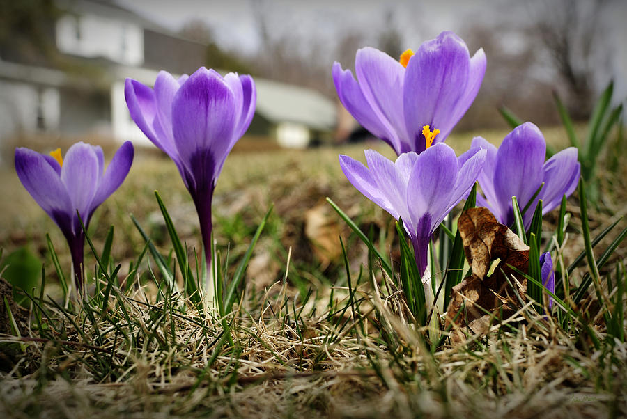 Spring Photograph - Suburban Spring by Luke Moore