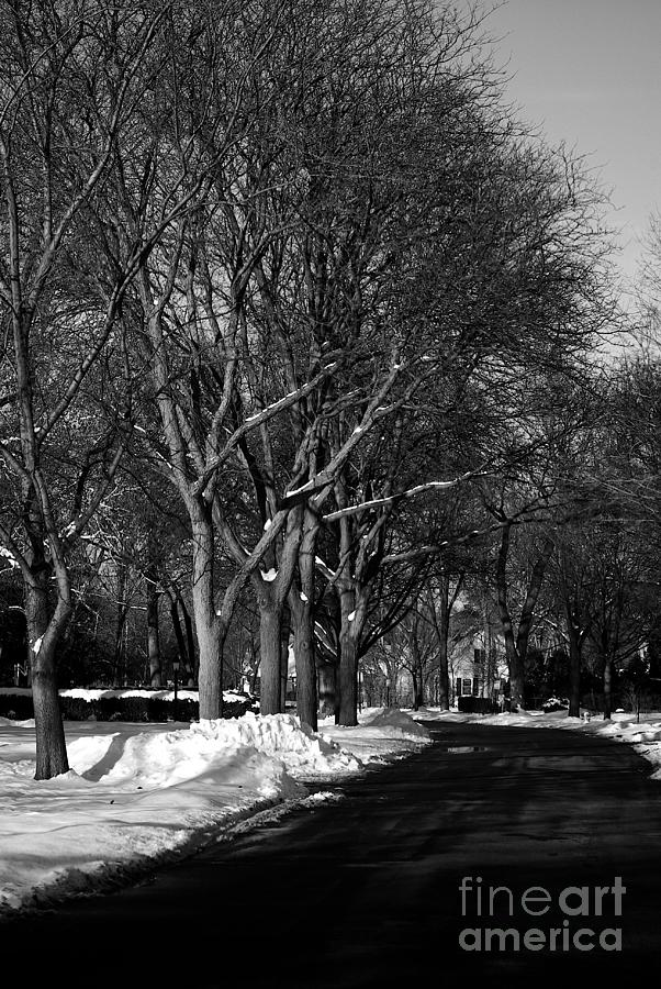 Suburban Street in Winter by Frank J Casella