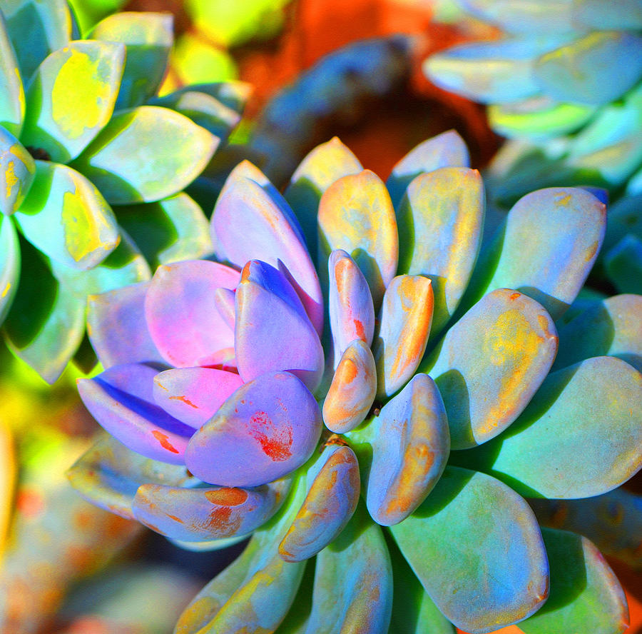 Succulent Painting - Succulent Color - Botanical Art by Sharon Cummings by Sharon Cummings