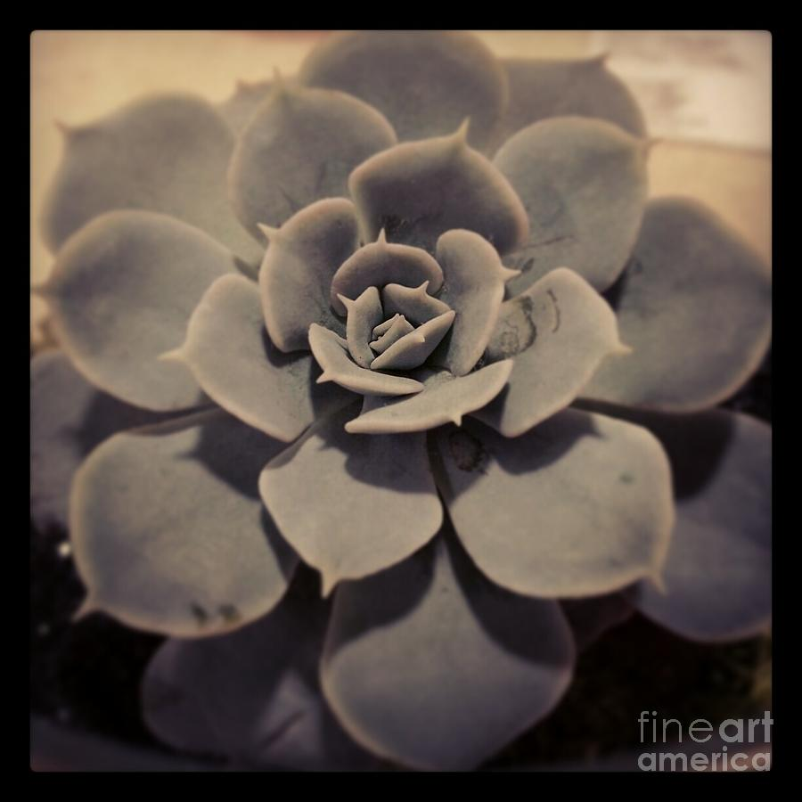 Hen's Photograph - Succulent by Heather L Wright