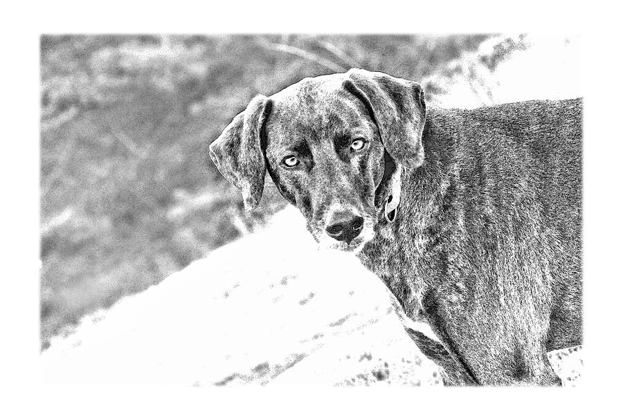 Dog Photograph - Such A Pretty Girl by Peggy Collins