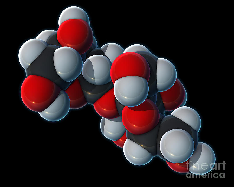 3d Model Photograph - Sucrose Molecular Model by Evan Oto