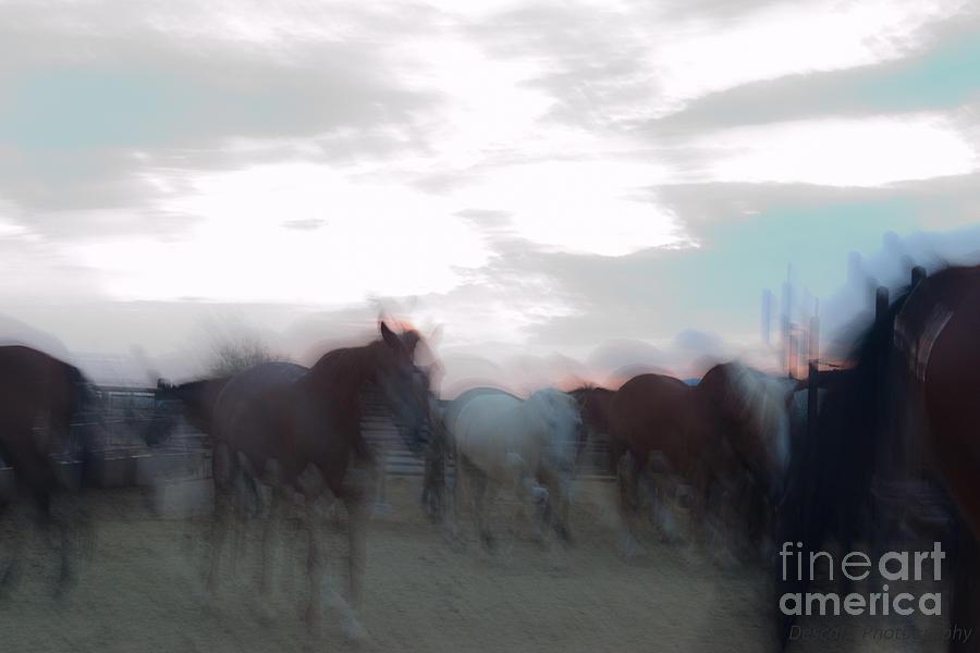 Horses Photograph - Suenos Del Caballos by Patty Descalzi