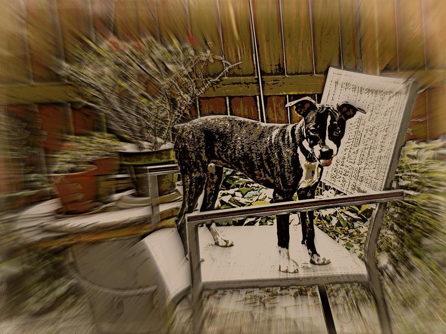 Lucy Digital Art - Sufferin Succotash by Tg Devore