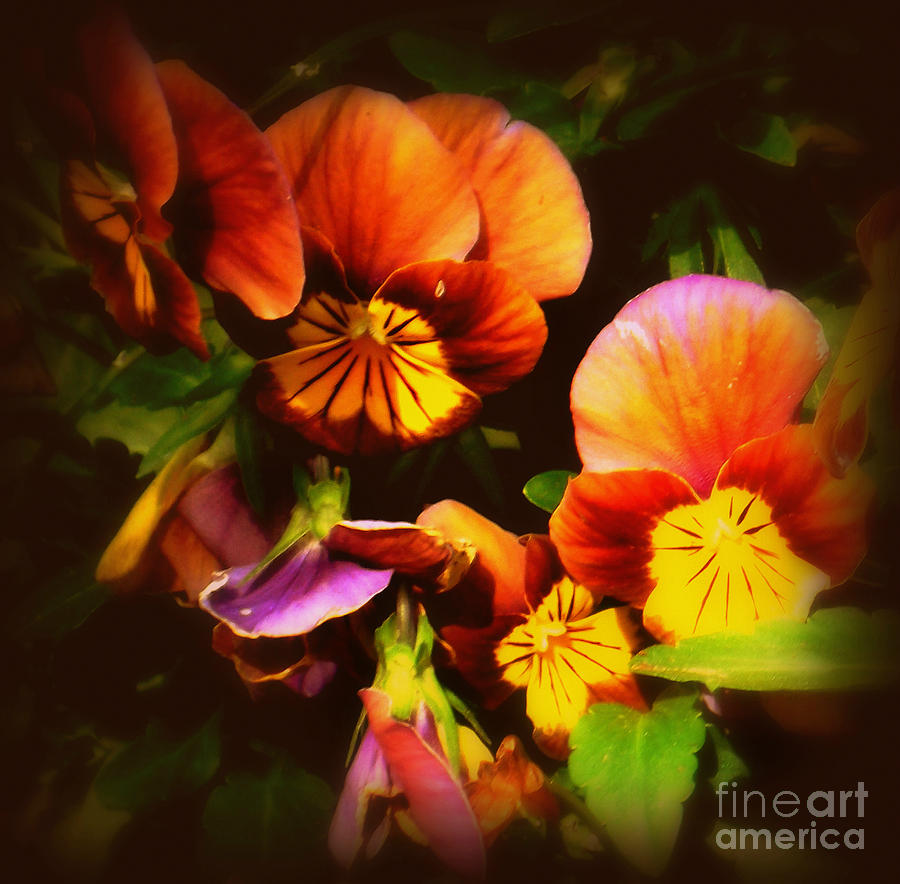 Flower Photograph - Sultry Nights - Flower Photography by Miriam Danar