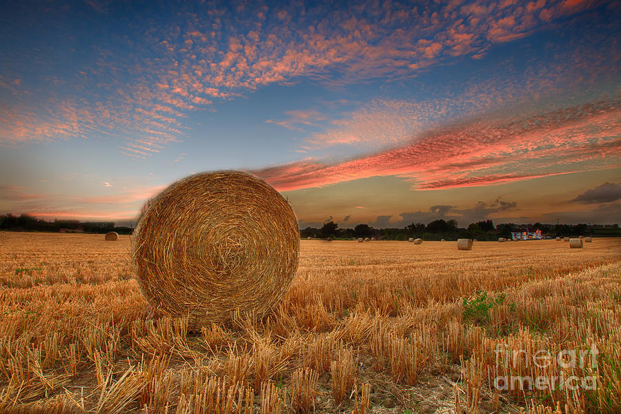 Field Photograph - Summer Bales by Pete Reynolds