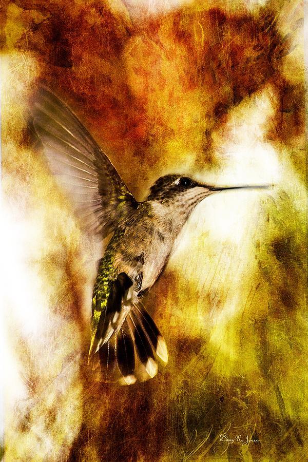 Summer Beauty Photograph - Hummingbird - In Flight - Summer Beauty by Barry Jones