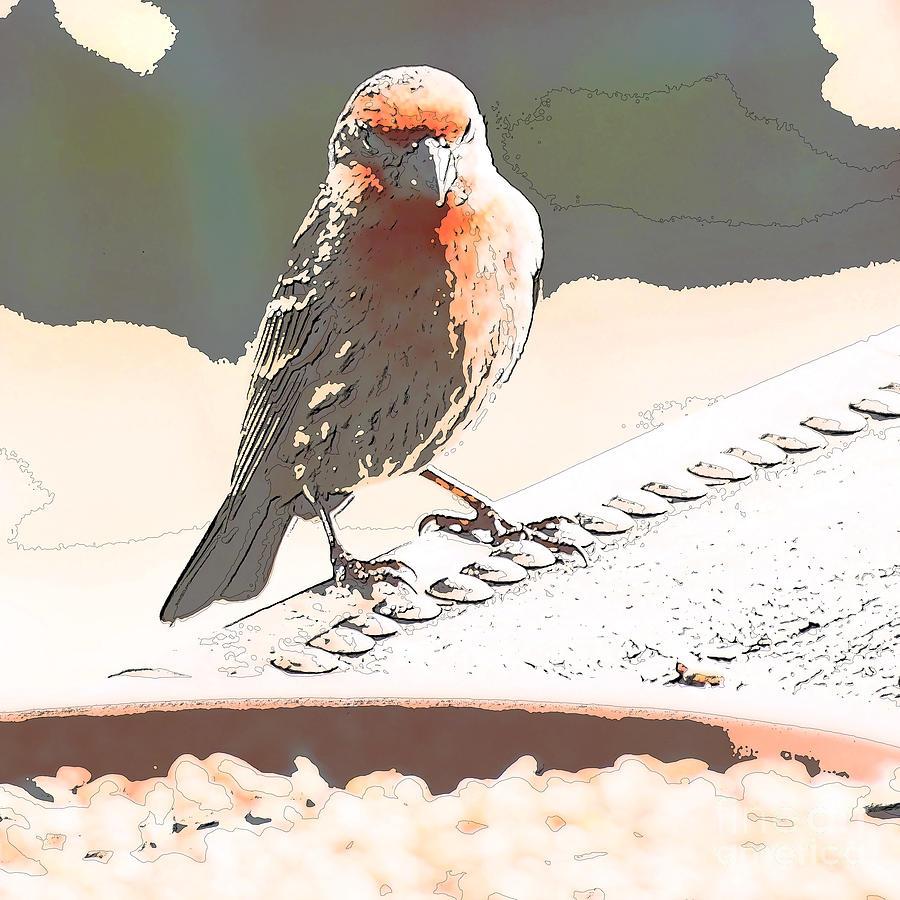 Zebra Finch Digital Art - Summer Bird by Artist and Photographer Laura Wrede
