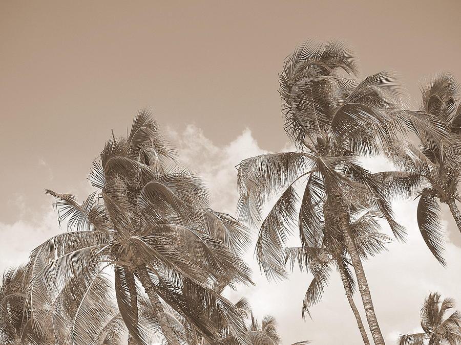 Tropical Photograph - Summer Breeze by Athala Carole Bruckner