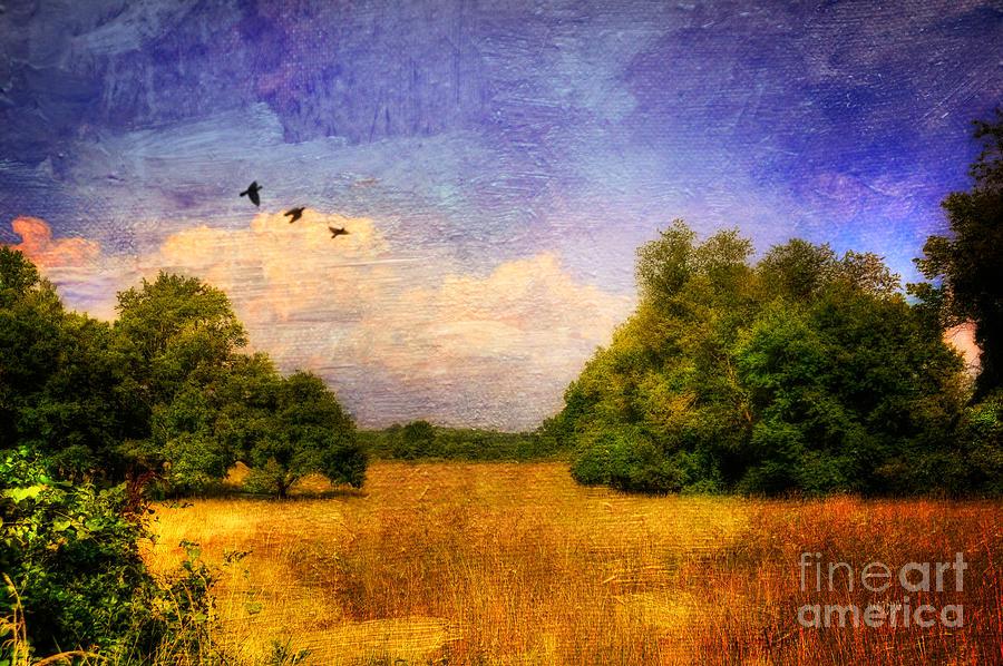 Landscape Photograph - Summer Country Landscape by Lois Bryan