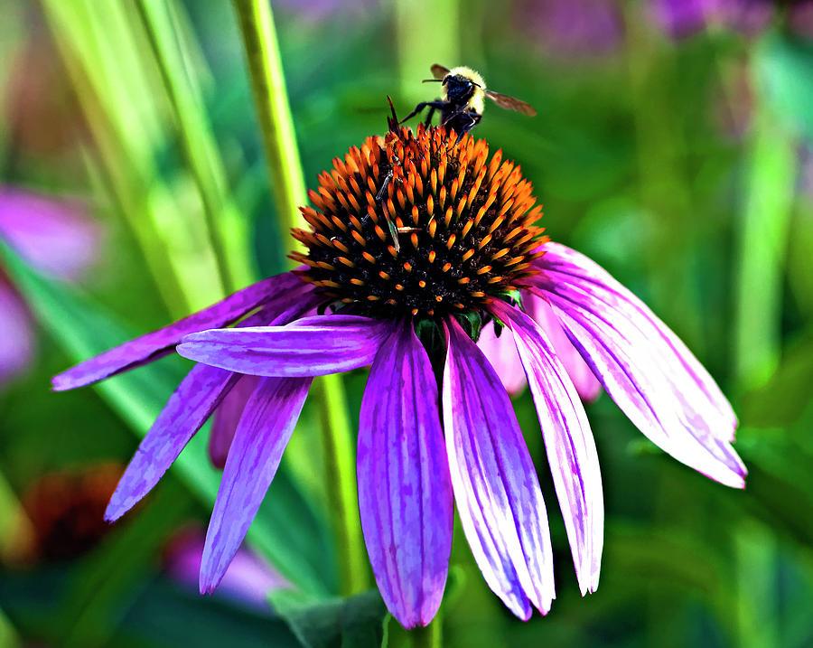 Flower Photograph - Summer Daze by Steve Harrington