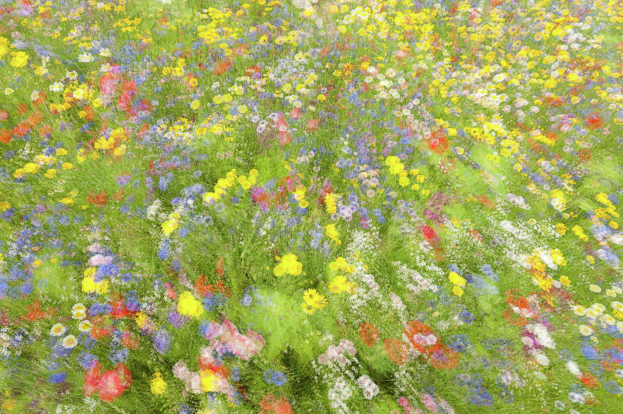 Impressionism Photograph - Summer Field Flowers.......... by Piet Haaksma