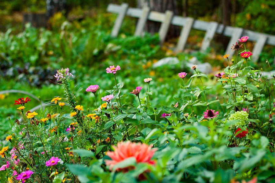 Garden Photograph - Summer Garden by Viacheslav Savitskiy