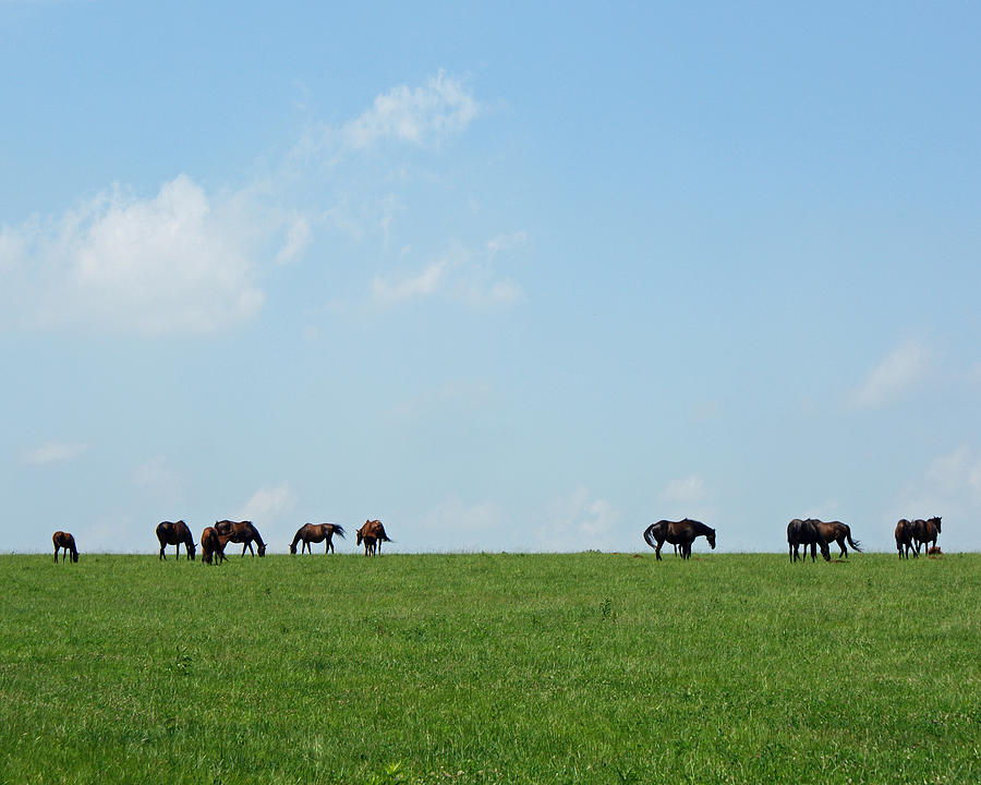 Thoroughbreds Photograph - Summer Grazing by Roger Potts