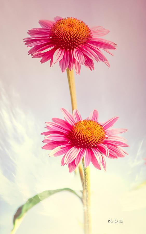 Flower Photograph - Summer Impressions Cone Flowers by Bob Orsillo