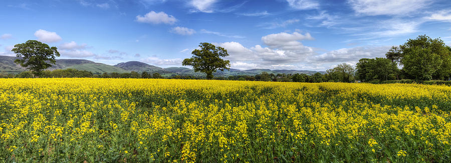 Sky Photograph - Summer Meadow by Ian Mitchell