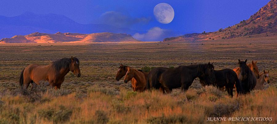 Wild Horses Photograph - Summer Moon  by Jeanne  Bencich-Nations