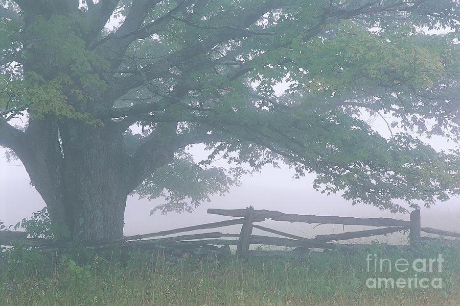 Summer Morning Fog Photograph