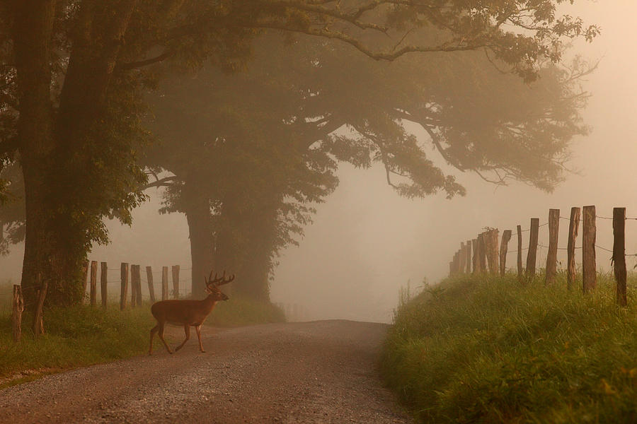 Smoky Mountain Photograph - Summer Morning Stroll by Yoder Images