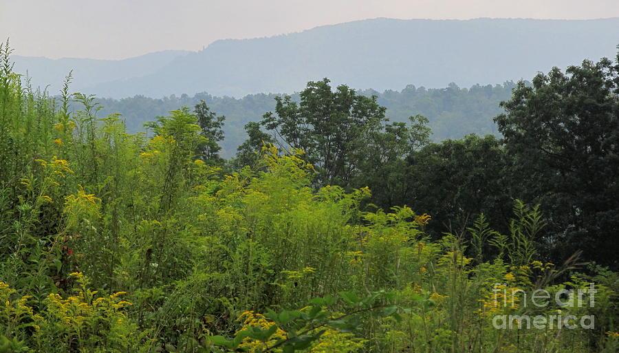 Summer Mountain Vista Photograph
