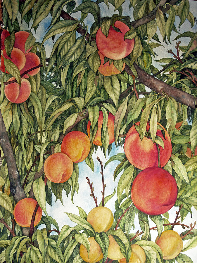 Peaches Painting - Summer Peaches by Helen Klebesadel