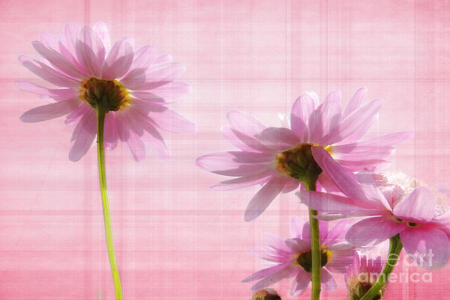 Flowers Photograph - Summer Pinks by Susie Peek