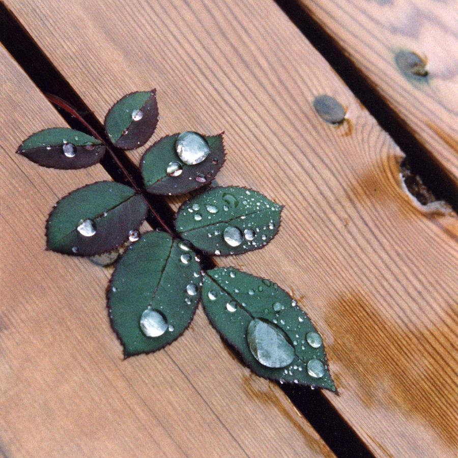 Rain Photograph - Summer Rain by Stephen Prestek