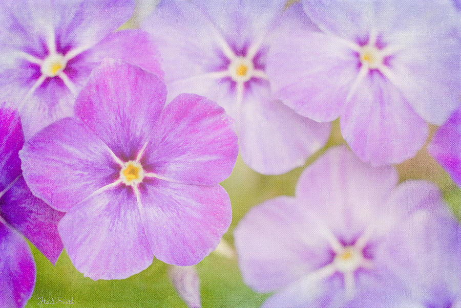 Plant Photograph - Summer Romance  by Heidi Smith