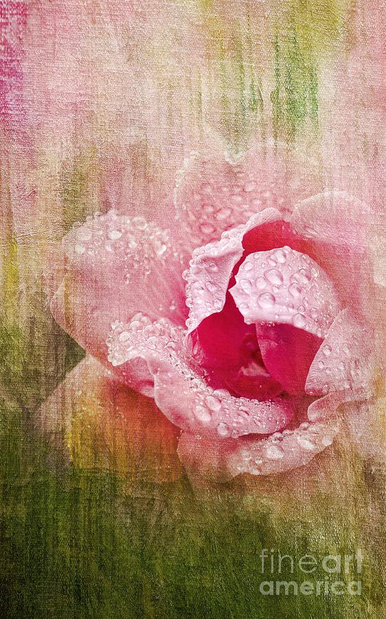 Rose Photograph - Summer Rose #2 by Betty LaRue