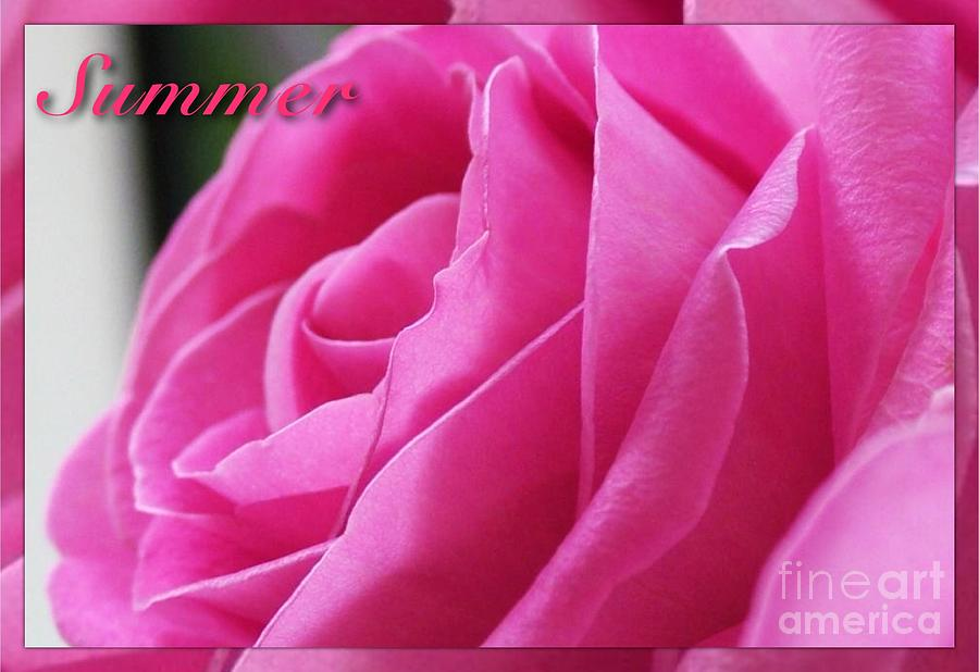 Roses Photograph - Summer Rose by Joan-Violet Stretch