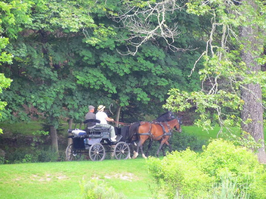 Horses And Carriage Photograph - Summer Stroll by Elizabeth Dow