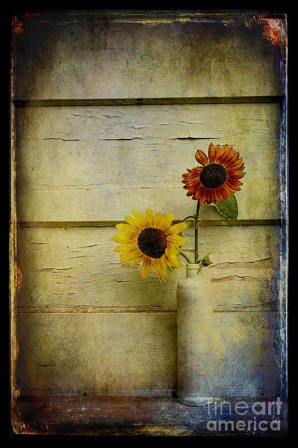 Sunflowers Photograph - Summer Sunflowers by Sari Sauls
