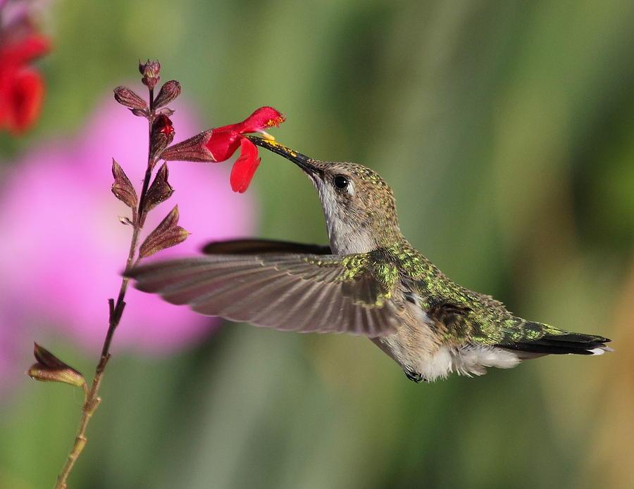 Bird Photograph - Summer Time Friend by SB Sullivan