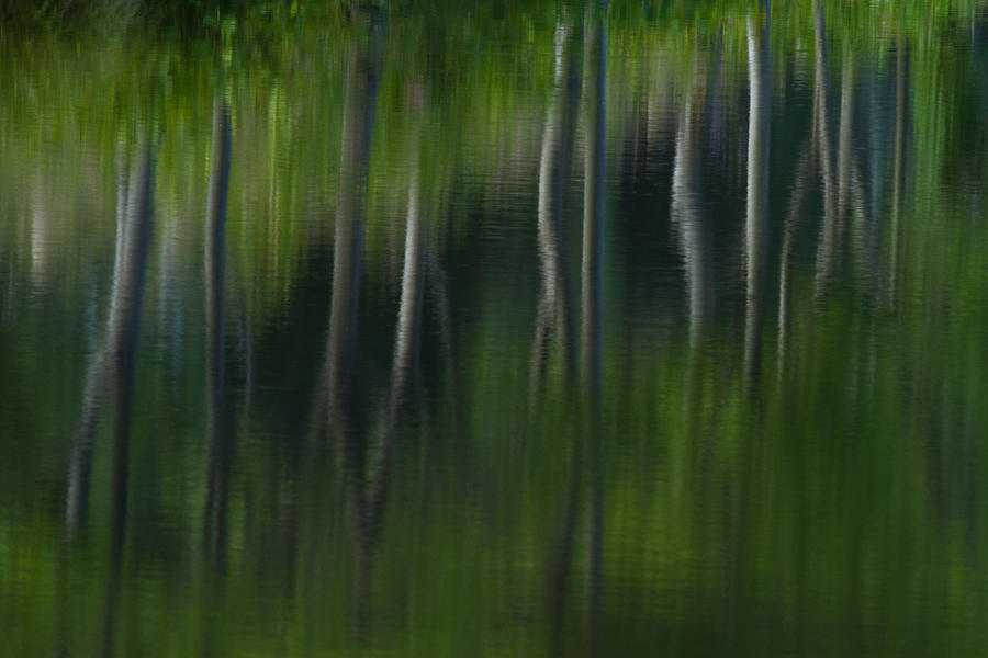 Reflection Photograph - Summer Trees by Karol Livote