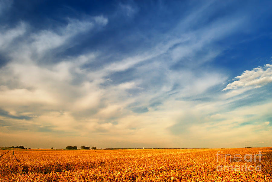 Summer Wheat Field In The Evening Photograph