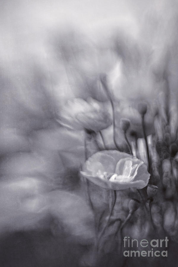 And Photograph - Summer Whispers Iv by Priska Wettstein