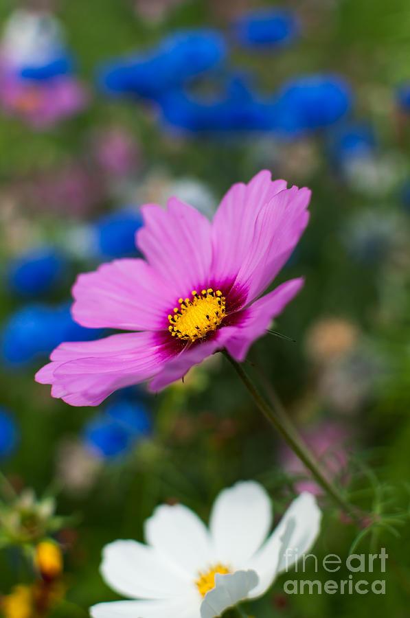 Flowers Photograph - Summer Wild Blooms by Matt Malloy