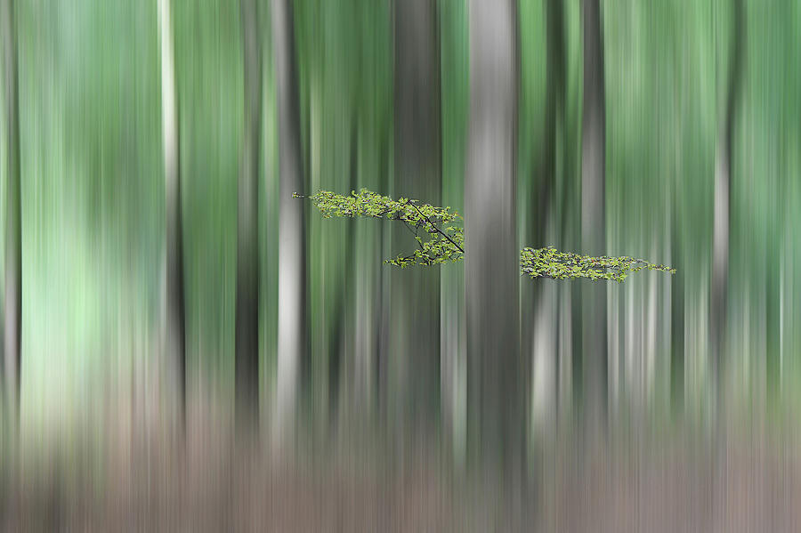 Forest Photograph - Summermorning by Huib Limberg