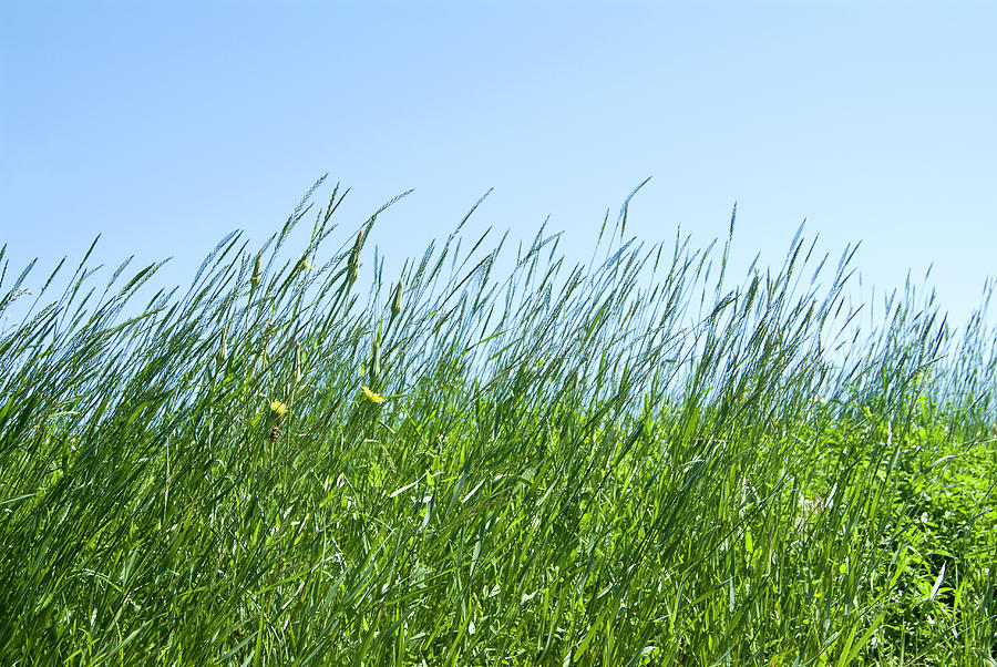 Summertime Grass And Blue Sky Photograph by Thomas Firak Photography