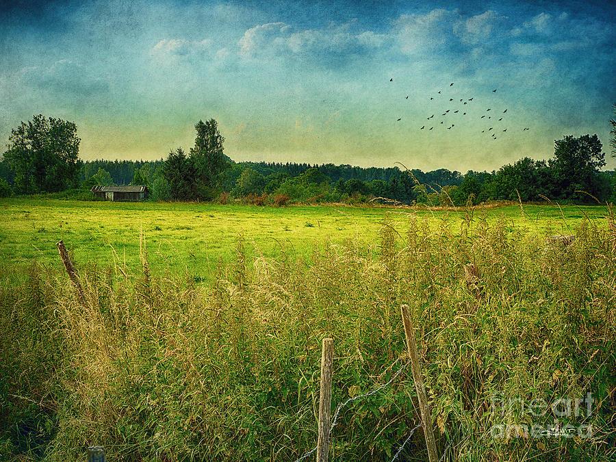 Photo Photograph - Summertime by Jutta Maria Pusl