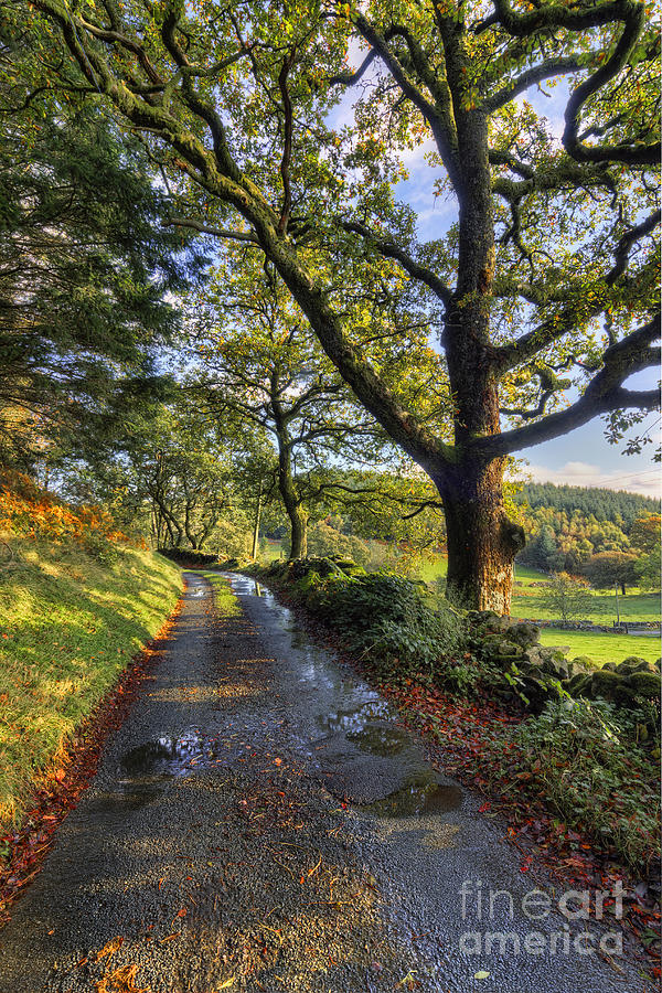 Country Photograph - Sun After The Rain by Ian Mitchell